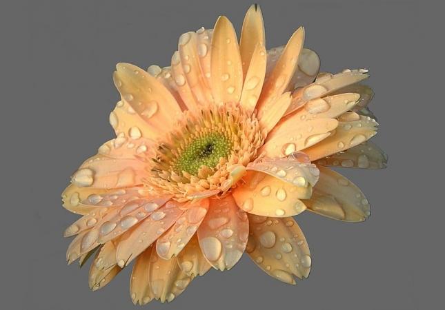 flower-1505330_960_720